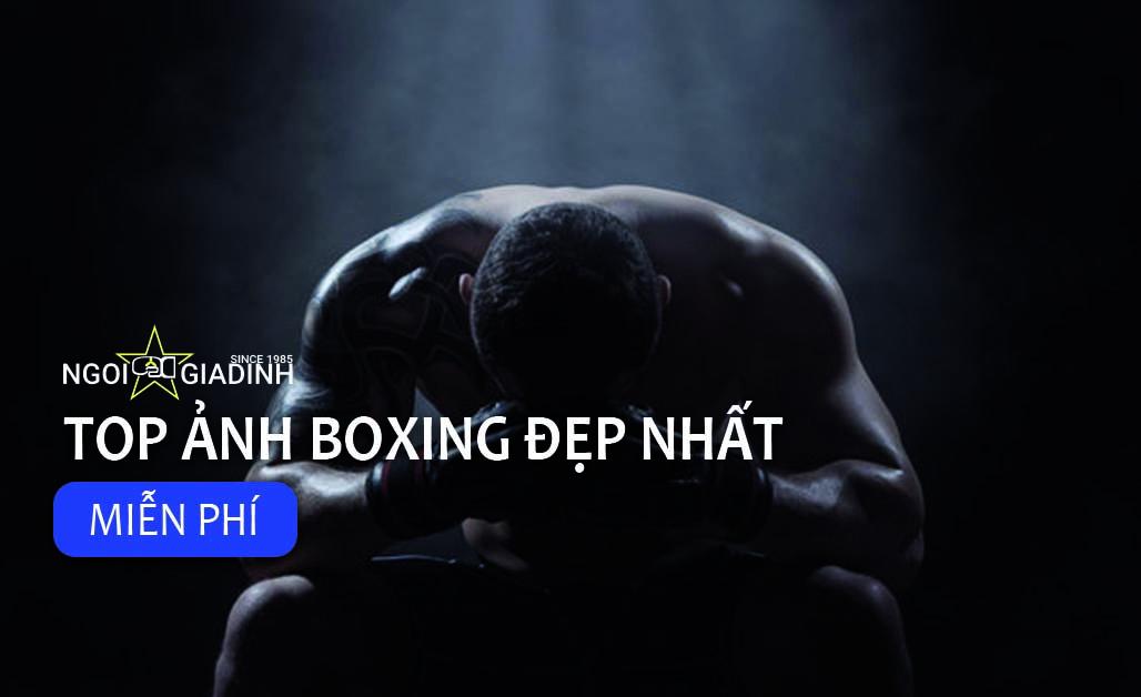 Top ảnh boxing đẹp miễn phí
