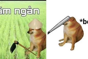 Tổng hợp 29+ meme chó shiba Cheems hài